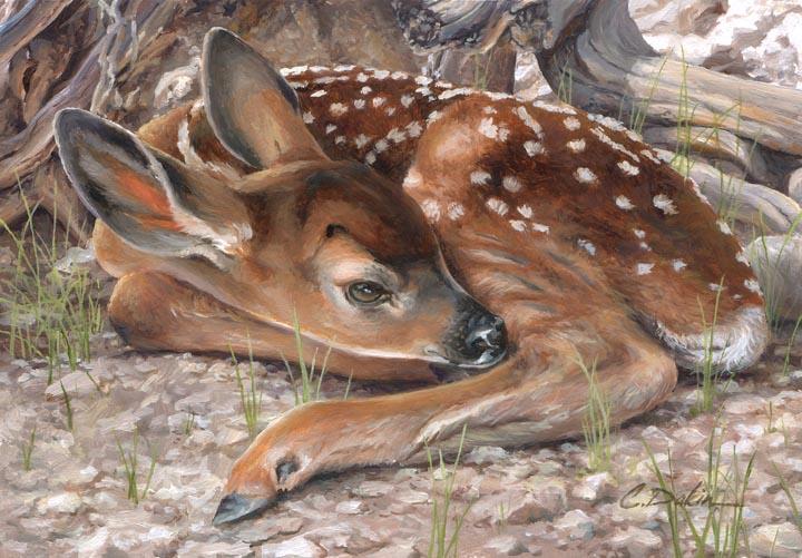 Plain Sight - Mule Deer Fawn - Charity Dakin