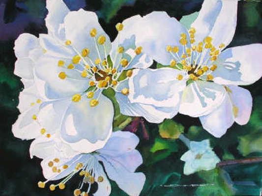 Plum Blossoms In Green Gregg Johnson