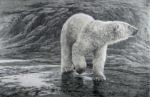 Polar Bear - Lithography - Robert Bateman