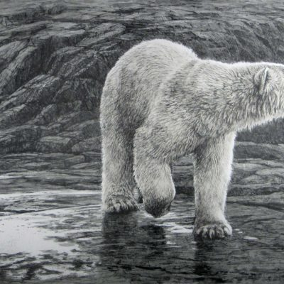 Polar Bear - Lithography - Robert Bateman