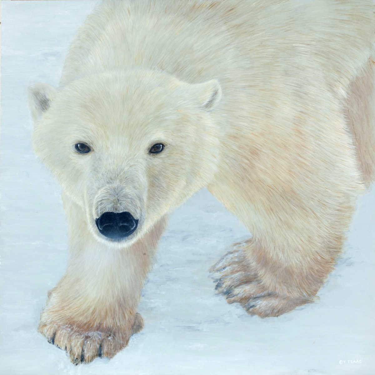 Polar Expression Terry Isaac