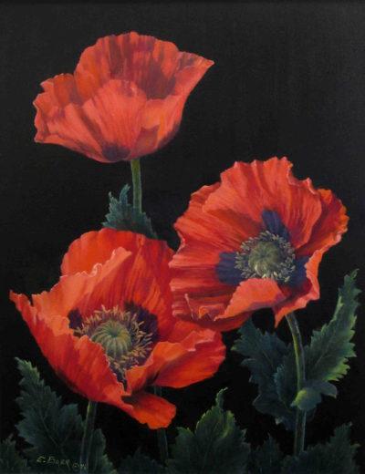 Poppies Elsie Baer