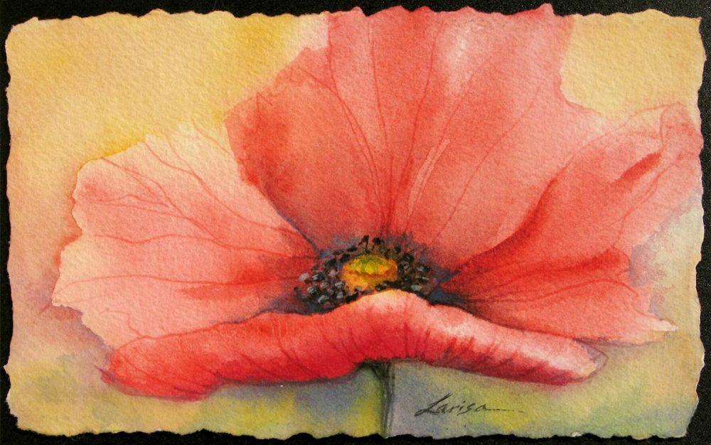 Poppy Study #4 - Larisa Cheladyn