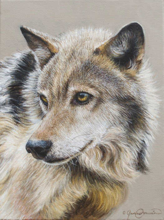 Portrait Of A Wolf James Corwin
