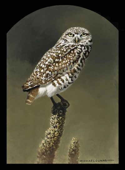 Prairie Light - Burrowing Owl