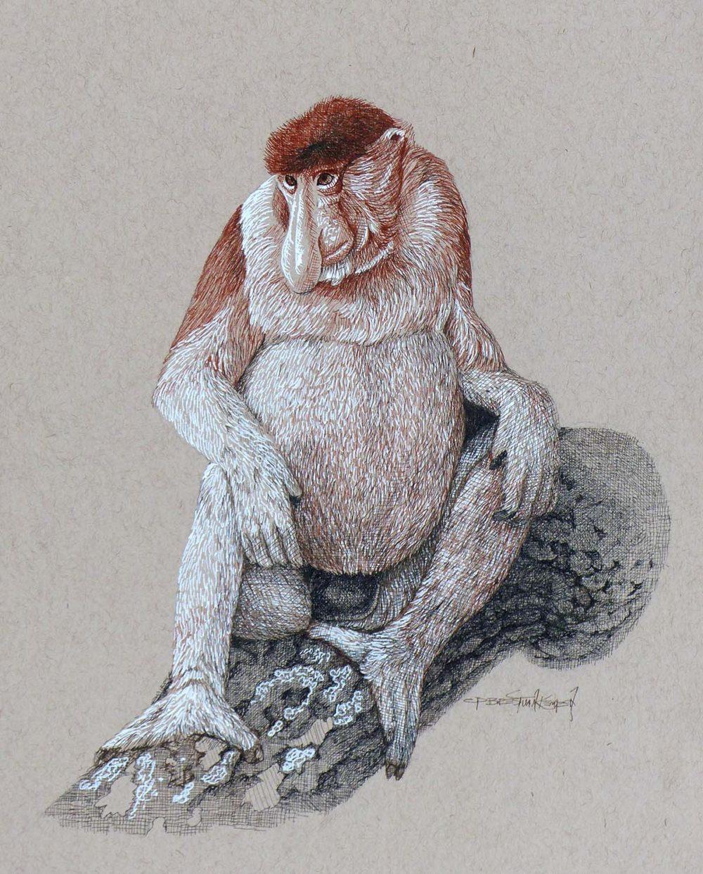 Probaoscis Monkey - Carel Brest van Kempen