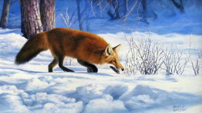 Red Fox - Marla Wilson
