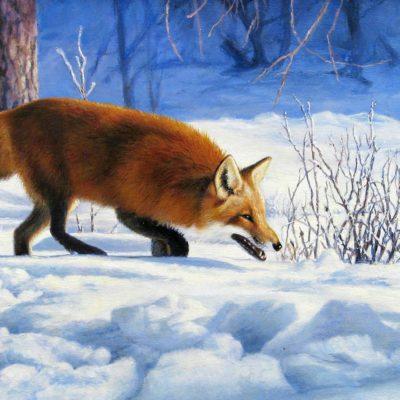 Red Fox - Marla Wilson