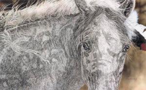 Red Horse Judy Larson