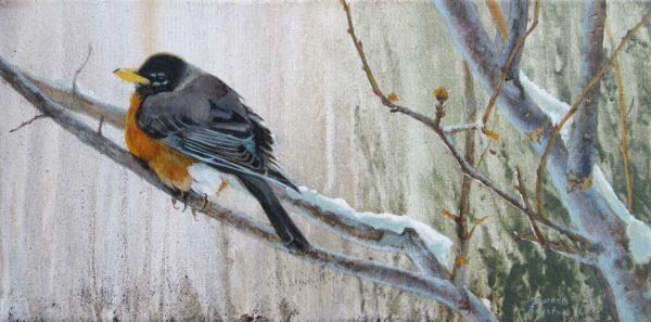 Resting Robin - Maurade Baynton