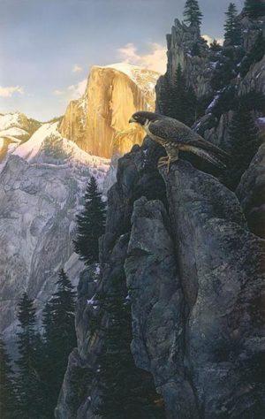 Return Of The Falcon Stephen Lyman