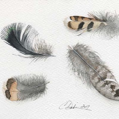 Ruffed Grouse Feather Collection - Charity Dakin