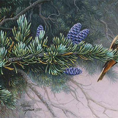 Rufus Hummingbird And Mountain Hemlock Wildflower Suite Stephen Lyman