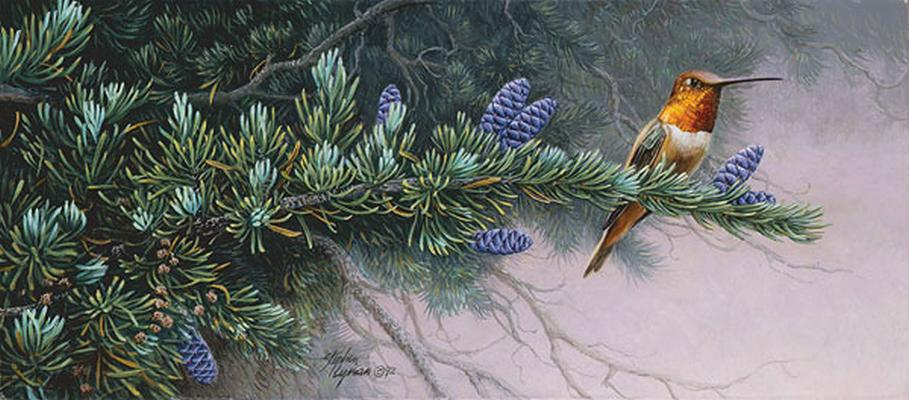 Rufus Hummingbird And Mountain Hemlock Wildflower Suite Stephen Lyman
