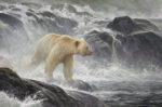 Salmon Watch - Spirit Bear - Robert Bateman
