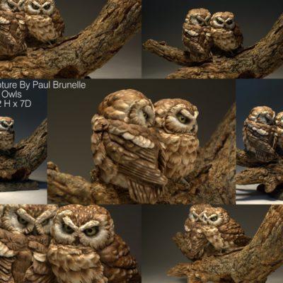 Saw Whet Owls Paul Brunelle
