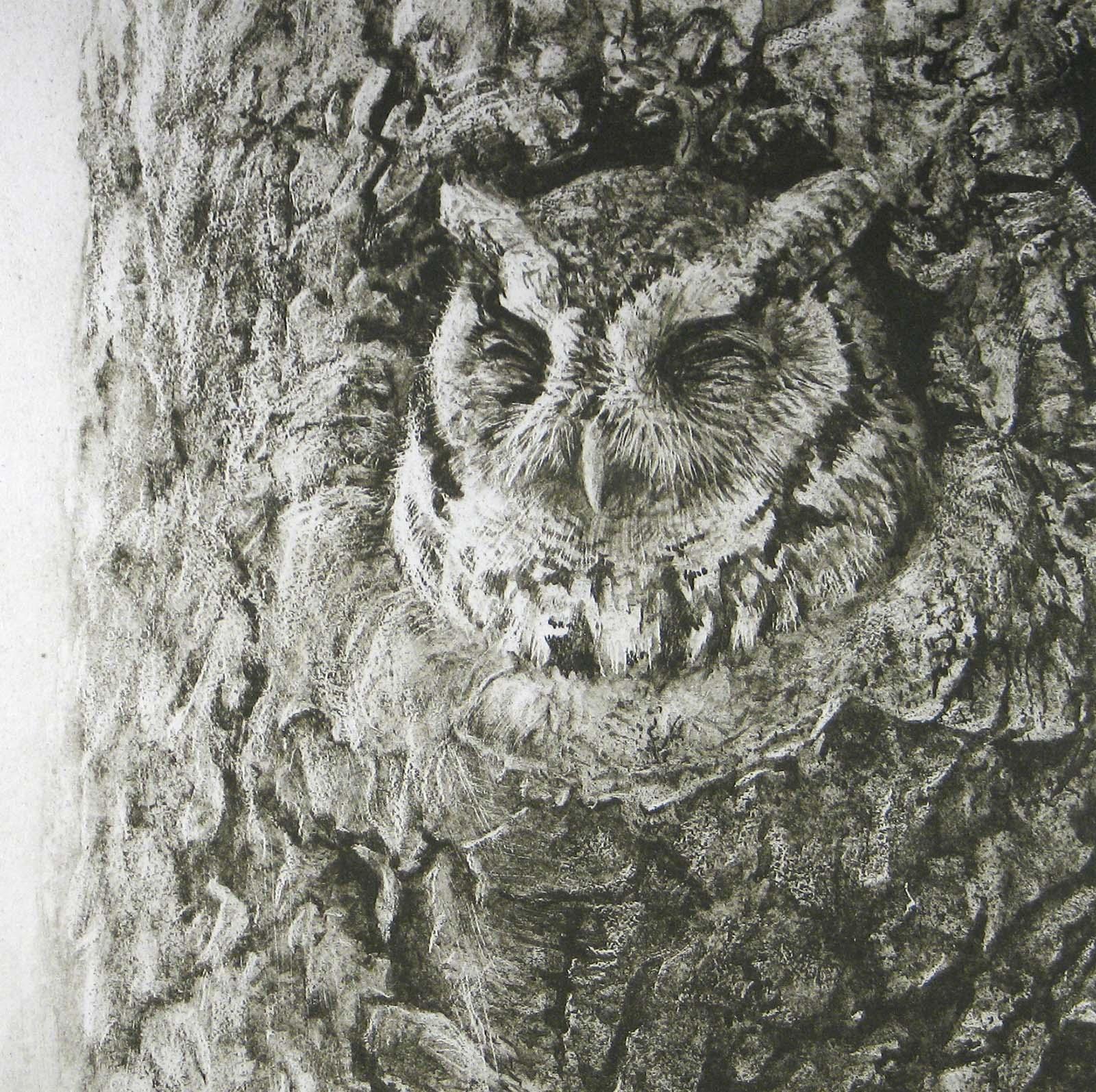 Screech Owl in Apple Tree - Etching - Robert Bateman