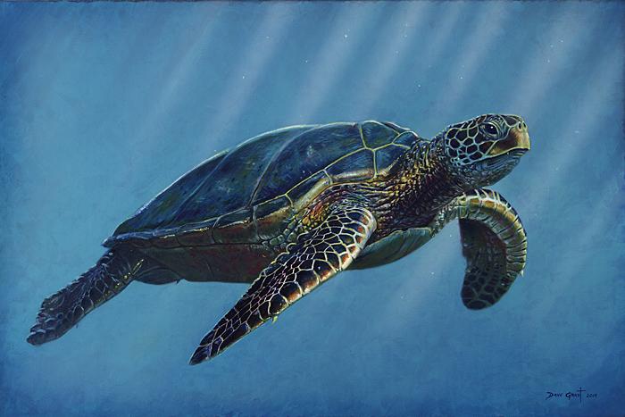 Sea Turtle - David Grant