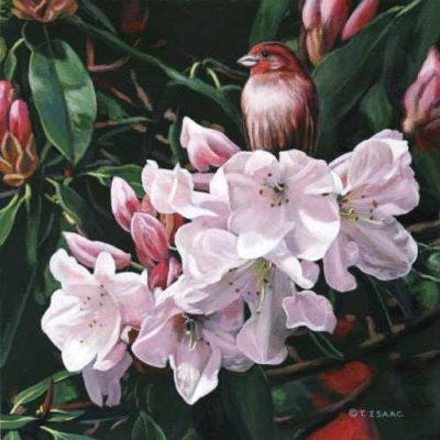 Shades Of Pink Terry Isaac
