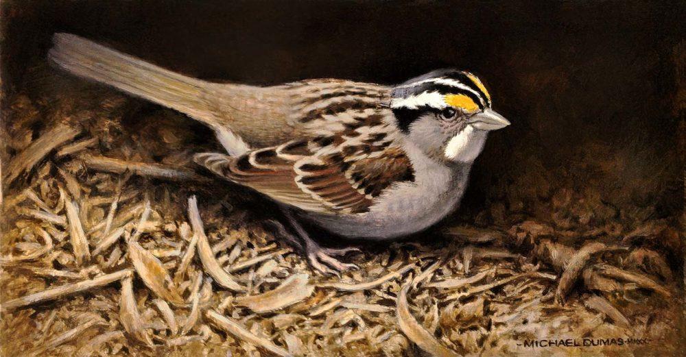 Shadow's Edge - White-throated Sparrow - Michael Dumas