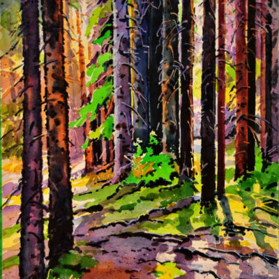 Shadows On The Trail To Chephren Lake Banff Gregg Johnson
