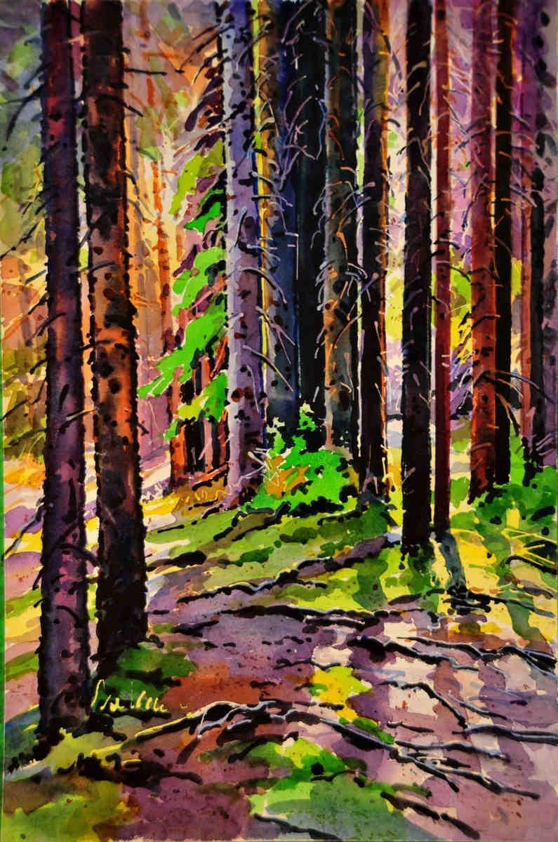Shadows On The Trail To Chephren Lake Banff Gregg Johnson