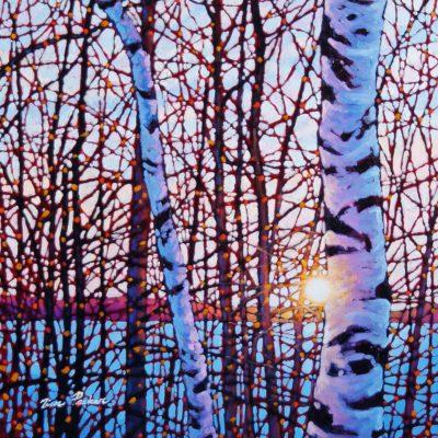 Shining Birches Lake Baptiste Tim Packer