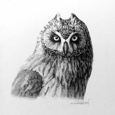 Short Eared Owl Portrait Carel Brest Van Kempen