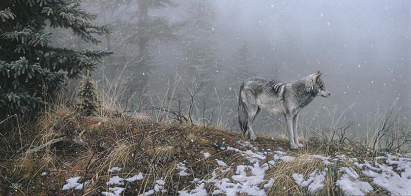 Silent Snows Stephen Lyman
