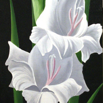 Single White Gladiolus Dennis Magnusson