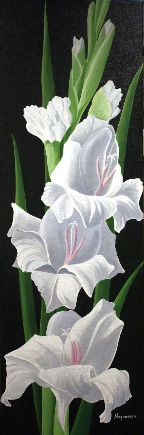 Single White Gladiolus Dennis Magnusson
