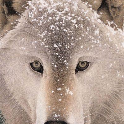 Snow Wolf - Barbara Banthien