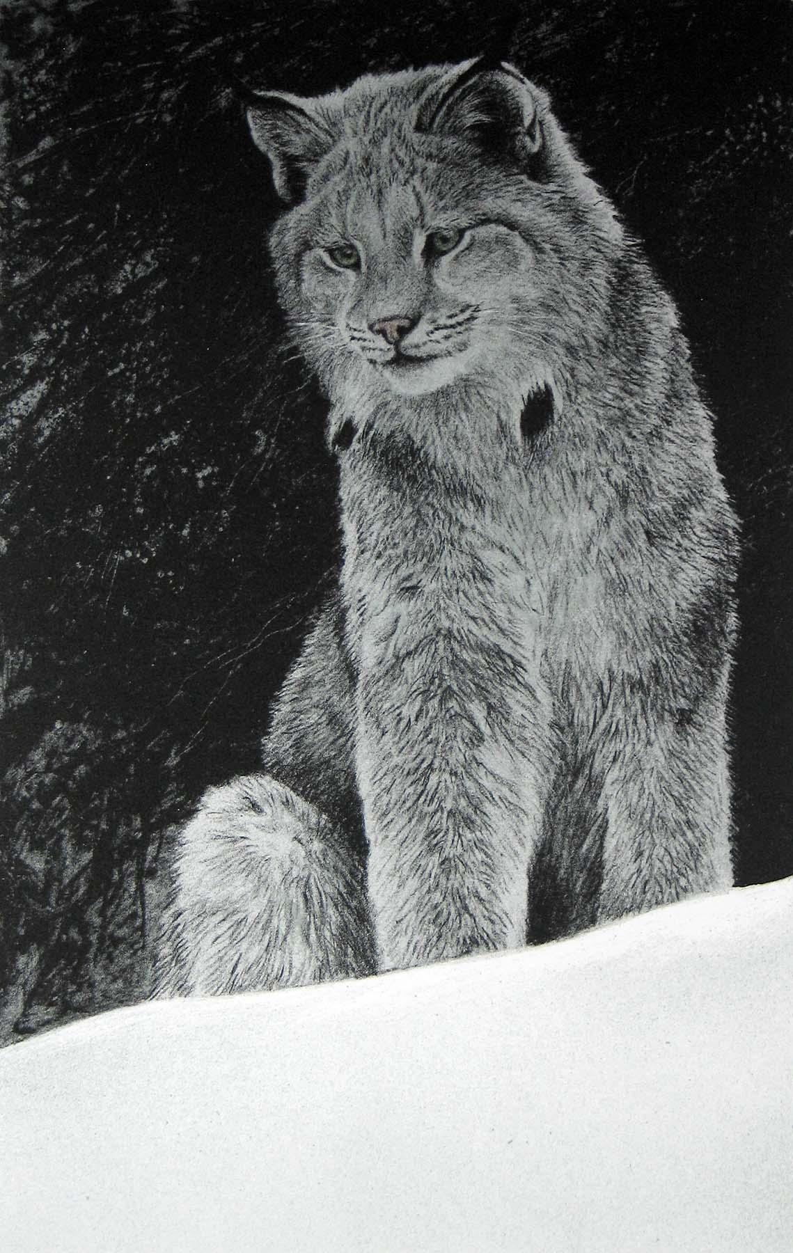Snowy Range - Lynx - Etching - Robert Bateman