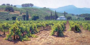 Sonoma Valley Summer June Carey