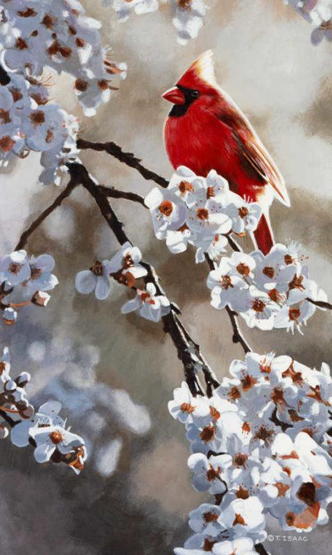 Spring Light Cardinal Terry Isaac