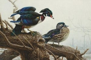 Spring Mist Wood Ducks Michael Dumas
