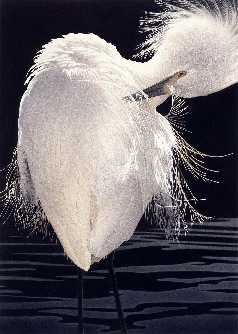 Study in White - Barbara Banthien