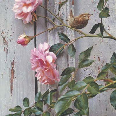 Summer Roses Carl Brenders