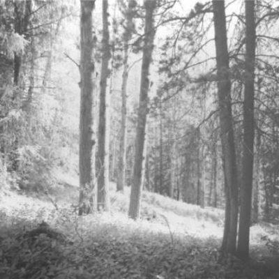 Sunlit Slope Near Bow River Fred Braakman