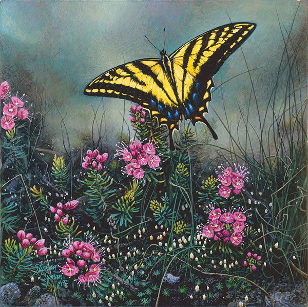 Swallowtail Butterfly And Pink Mountain Heather Wildflower Suite Stephen Lyman