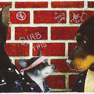 The Bad Doggies Will Bullas