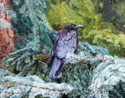 The Crow on Blue Spruce - Kerri Burnett