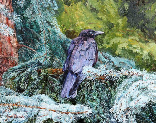 The Crow on Blue Spruce - Kerri Burnett