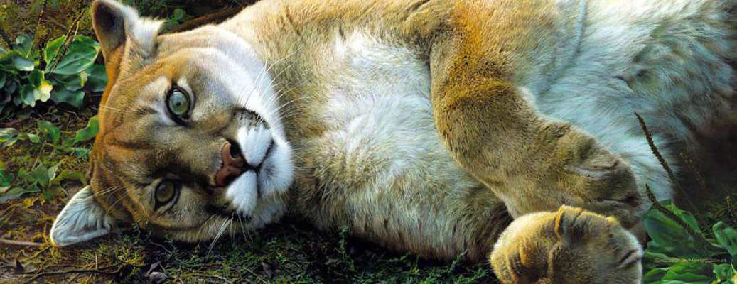 cougar life any good