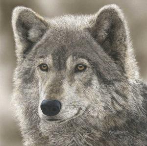 The Play Wolf Judy Larson