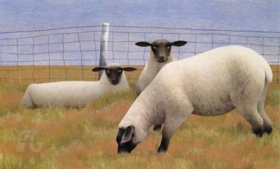 Three Sheep - Alex Colville