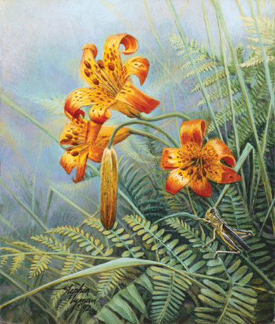 Tiger Lilies And Grasshopper Wildflower Suite Stephen Lyman