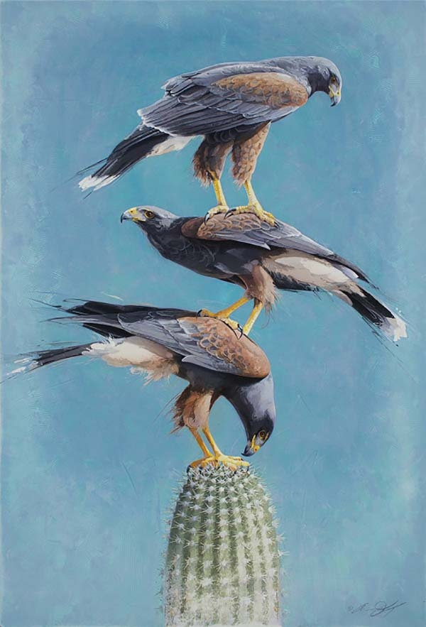 Totem #2 - Stacked Harris Hawks - Andrew Denman