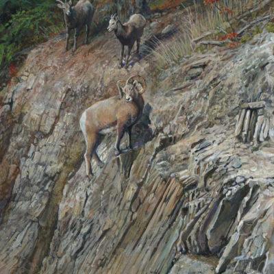 Trio Banff Area Kerri Burnett