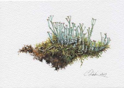 Trumpet Lichen & Moss - Charity Dakin